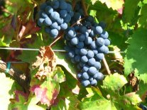 Winnica Dwie Granice